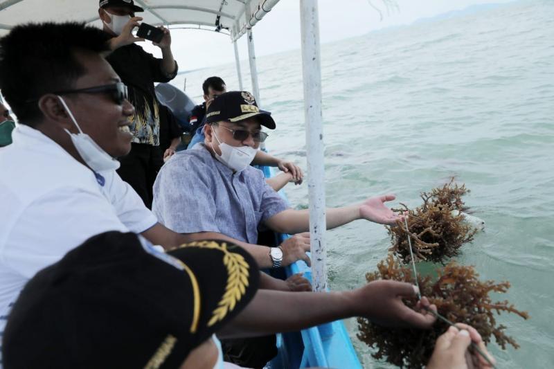 Komoditas Tambahan, Rumput Laut yang Menjanjikan Peningkatan Ekonomi Masyarakat