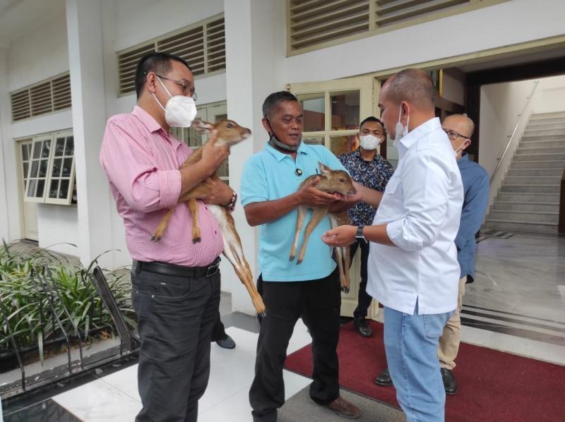 Kunjungi Istana Kepresidenan Bogor,  Molen Berkesempatan Susui Bayi Rusa Totol