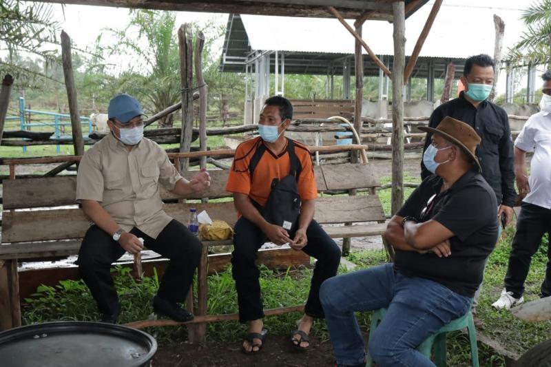 Gubernur Erzaldi Canangkan Desa Buding Menjadi Kampung Ternak Sapi