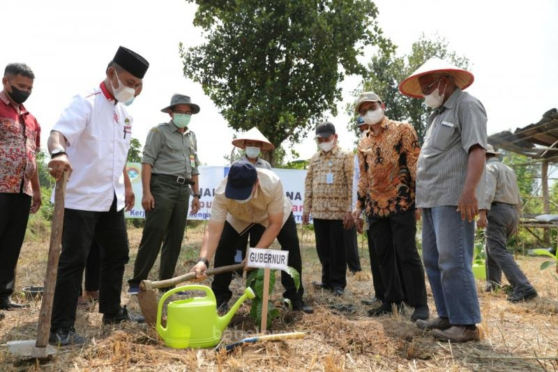 Wujudkan Program Klaster Kopi Bangka Belitung, Gubenur Tanam Perdana Kopi, Kapulaga, dan Cabe Jamu