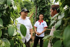Harga Lada dan Sawit Naik, Ekonomi Petani Bangka Belitung Semakin Naik
