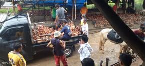 Ismail Politisi PDIP Bagikan Tiga Ribu Ekor Ayam Untuk Tiga Kecamatan