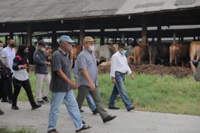 Berhasil Kelola Ribuan Sapi, Gubernur Erzaldi Berguru ke Mat Aji