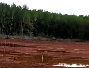 KPH Belantu Mendanau Belitung, Sebut Pembabatan Manggrove sudah ada Penggantian Tegakan