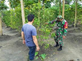 Babinsa Koramil 414-01/Tanjungpandan Komsos Dan Ajak Warga Berkebun