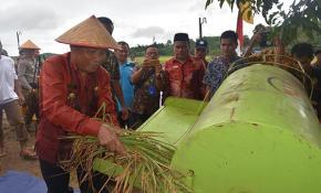 Bupati Bangka Panen Raya Padi Sawah di Pangkalniur