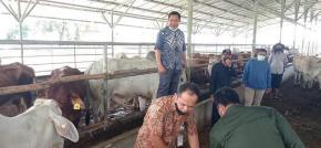 Wujudkan Swasembada Daging, Komisi II DPRD Babel Sasar Peternakan Sapi Di Balai Benih