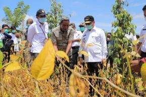 Harga Komoditi Unggulan Naik, Para Petani di Babel Bisa Bernapas Lega