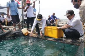 Usaha Keramba Ikan Kerapu Bantu Tingkatkan Ekonomi Masyarakat Pulau Semujur