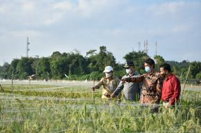 Menuju Pertanian Modern, Gubernur Tinjau Sawah Namang